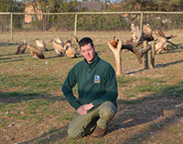 John working with injured vultures