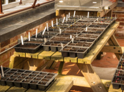 Seedtrays in greenhouse