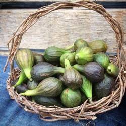 Fig Basket